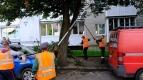 Работы по обрезке деревьев